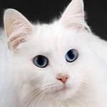 Zgodba o pogrešani s srečnim koncem: 67-letnico, ki je odšla neznano kam z belo mačko, so našli