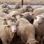 OBSCENO: Medtem, ko desničarski politiki napadajo istospolne zveze, del desničarskega življa v Sloveniji spolno občuje z živino v hlevih